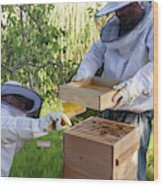 Two Beekeepers Removing The Feeder Tray Wood Print