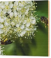 Two Bees On A Rowan Truss - Featured 3 Wood Print