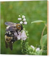 Two Bees On Flower Wood Print