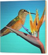 Two Birds Of Paradise Wood Print