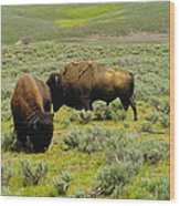 Two Bison Wood Print