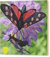 Two Black And Red Butterflies Wood Print