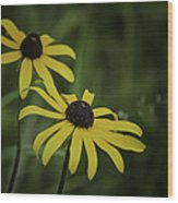 Two Black Eyes On The Macomb Orchard Trails Wood Print