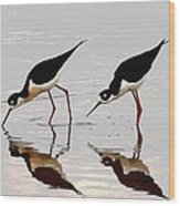 Two Black Neck Stilts Eating Wood Print