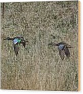 Two Blue Winged Teal Wood Print