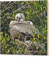 Two Brown Pelicans Wood Print