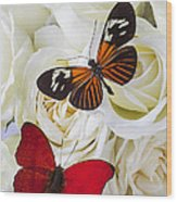 Two Butterflies On White Roses Wood Print