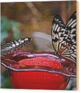 Two Butterflys Wood Print