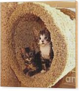 Two Cats In A Condo Wood Print