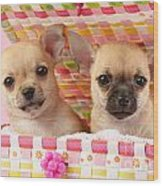 Two Chihuahuas Wood Print by Greg Cuddiford