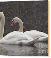 Two Christmas Swans A Swimming Wood Print