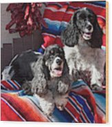 Two Cocker Spaniels Together Wood Print