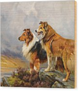 Two Collies Above A Lake Wood Print