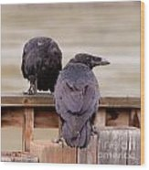 Two Common Ravens Corvus Corax Interacting Wood Print