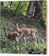 Two Deer Wood Print