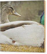 Two Ducks Wood Print