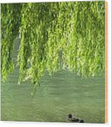 Two Ducks On Pond Wood Print