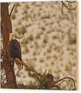 Two Eagles Hanging Out In Their Nest Wood Print