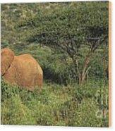 Two Elephants Walking Through The Grass Wood Print