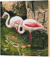 Two Flamingos Wood Print