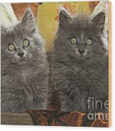 Two Fluffy Kittens Wood Print