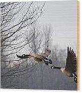 Two Geese In Flight Wood Print