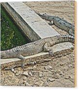Two Gharial Crocodiles In Gharial Conservation Breeding Center In Chitwan Np-nepal   Wood Print