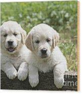 Two Golden Retriever Puppies Wood Print