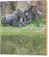 Two Gorillas Relaxing II Wood Print