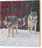 Two Gray Wolves Wood Print