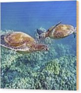 Two Green Turtles Wood Print