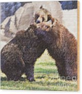 Two Grizzly Bears Ursus Arctos Play Fighting Wood Print