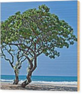 Two Heliotrope Trees On Tropical Beach Art Prints Wood Print