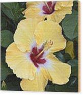 Two Hibiscus Wood Print