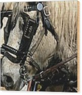 Two Horse Power Wood Print