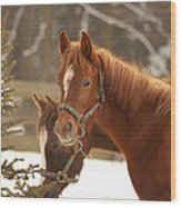 Two Horses In Winter Day Wood Print