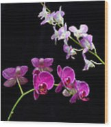 Two Kind Of Orchid Flower Wood Print