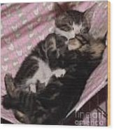 Two Kittens Sleeping Wood Print