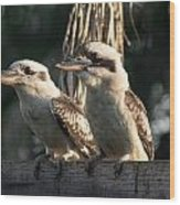 two Kookaburra Wood Print