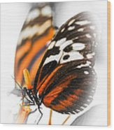 Two Large Tiger Butterflies Wood Print