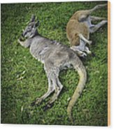 Two Lazy Kangaroos Lying Down Wood Print