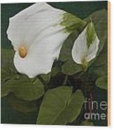 Two Lilies Wood Print