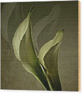 Two Lilly Fantasy Wood Print