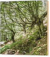 two little brothers Chasing Fairies in theBeech Forest on a summer day Wood Print