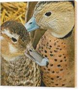 Two Little Ducks Wood Print