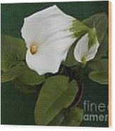 Two Lovely Lilies Wood Print