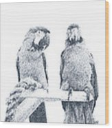 Two Macaws Wood Print