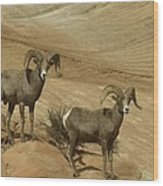 Two Male Rams At Zion Wood Print by Jeff Swan