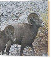 Two Male Rams Wood Print