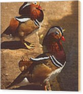 Two Mandarins Wood Print